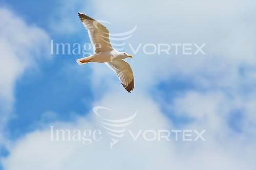 Bird royalty free stock image #901032121