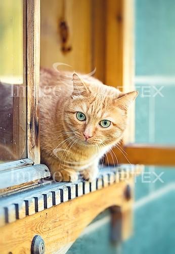 Pet / cat / dog royalty free stock image #904478386