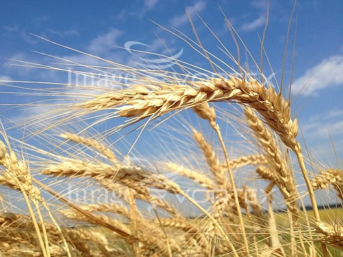 Industry / agriculture royalty free stock image #909282086