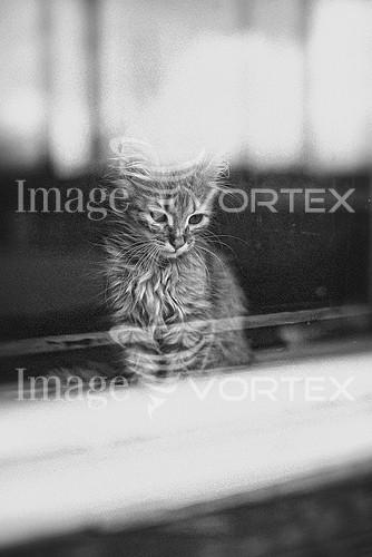 Animal / wildlife royalty free stock image #913434259