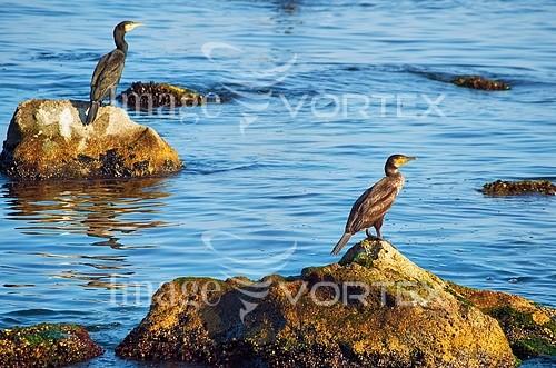 Bird royalty free stock image #914728738