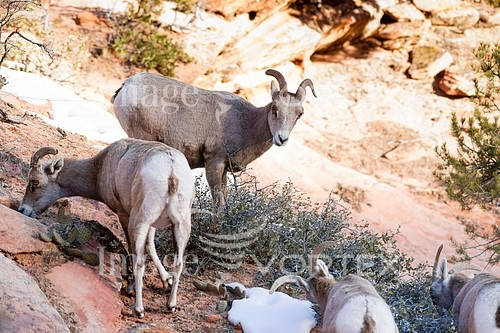 Animal / wildlife royalty free stock image #918902556