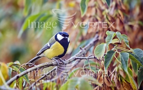Bird royalty free stock image #919565459