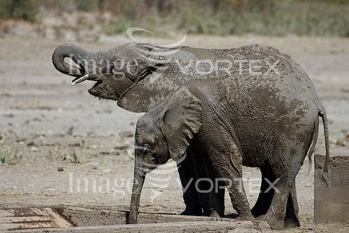 Animal / wildlife royalty free stock image #920539609