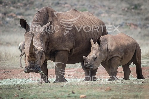 Animal / wildlife royalty free stock image #920528678