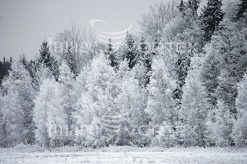 Nature / landscape royalty free stock image #921002681