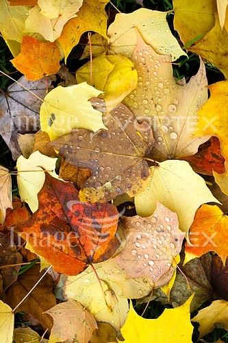 Nature / landscape royalty free stock image #921582951