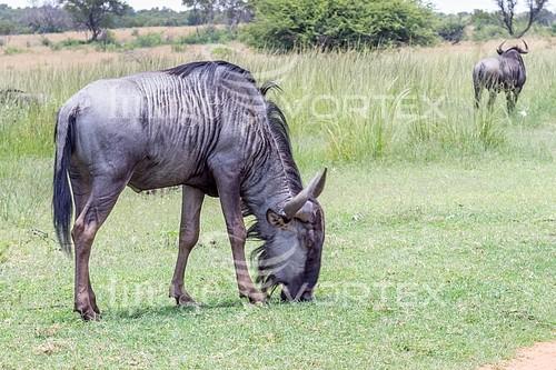 Animal / wildlife royalty free stock image #922722906