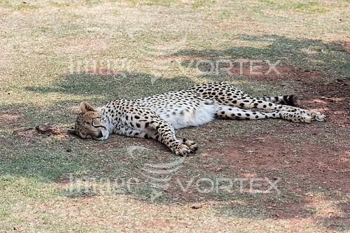 Animal / wildlife royalty free stock image #922424432