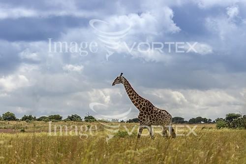 Animal / wildlife royalty free stock image #922802934