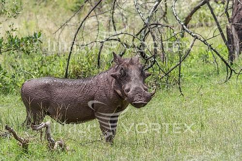 Animal / wildlife royalty free stock image #922777351