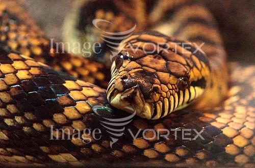 Animal / wildlife royalty free stock image #924596858