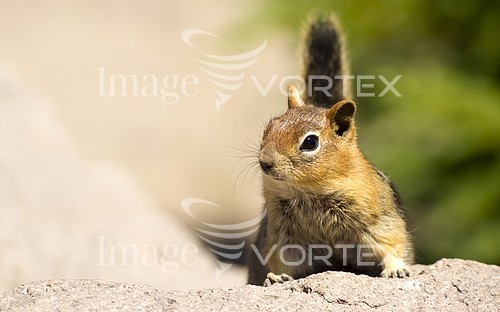 Animal / wildlife royalty free stock image #924390424