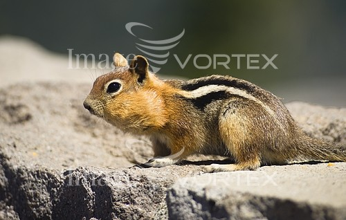 Animal / wildlife royalty free stock image #924442155