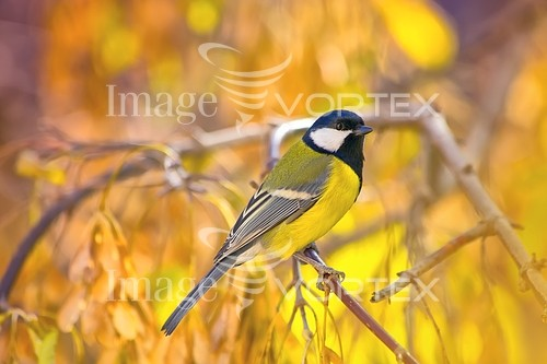 Bird royalty free stock image #926373320