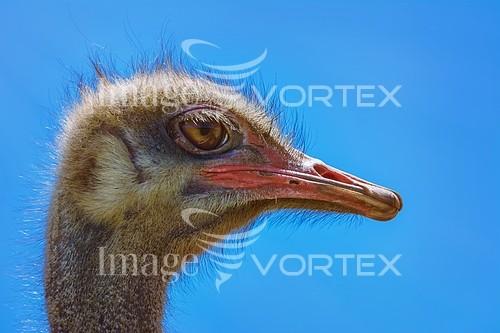 Bird royalty free stock image #927609340