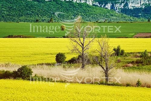 Nature / landscape royalty free stock image #927575535