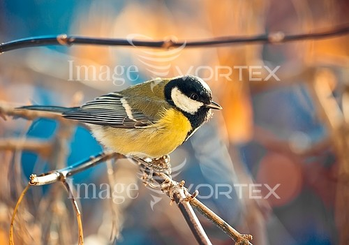 Bird royalty free stock image #928835308