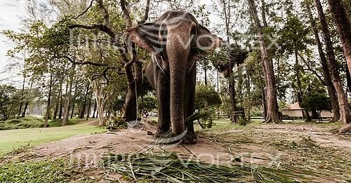 Animal / wildlife royalty free stock image #929135934