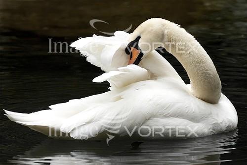 Animal / wildlife royalty free stock image #931008197