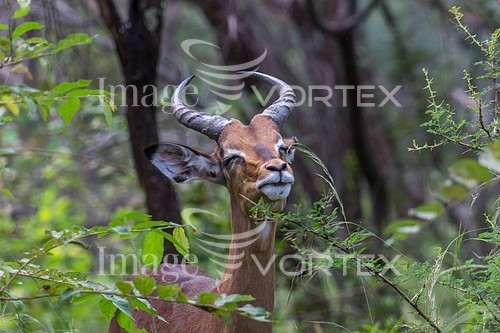 Animal / wildlife royalty free stock image #932659540