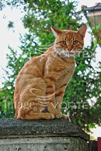 Animal / wildlife royalty free stock image #934374994