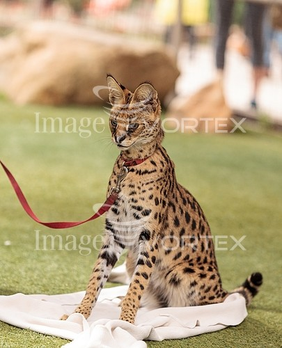 Animal / wildlife royalty free stock image #934738693