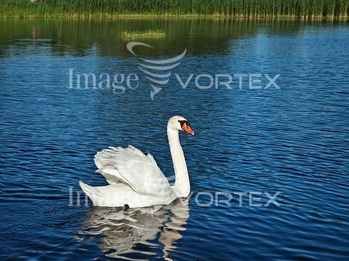 Bird royalty free stock image #934735704