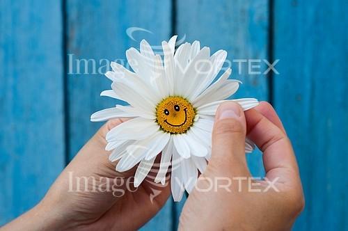 Flower royalty free stock image #935888154