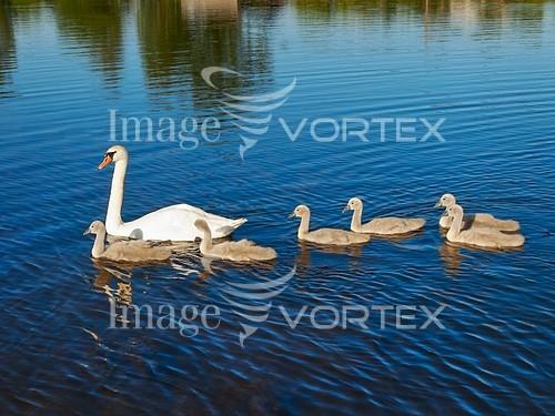 Bird royalty free stock image #935167695