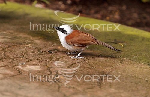 Bird royalty free stock image #936301675