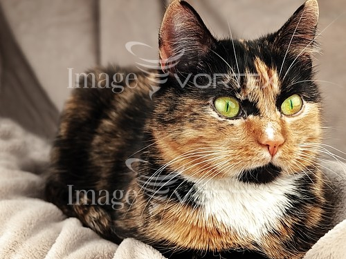 Pet / cat / dog royalty free stock image #937230968