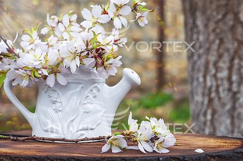 Flower royalty free stock image #937841463