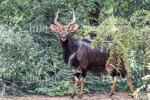 Animal / wildlife royalty free stock image #938031328