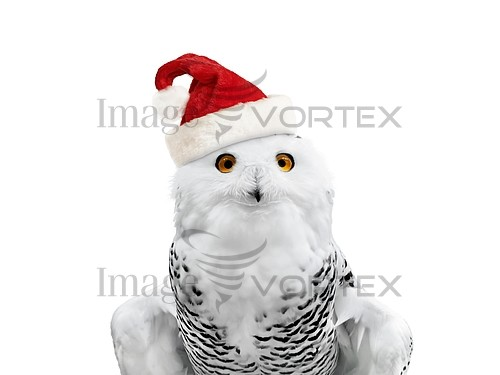 Christmas / new year royalty free stock image #939528942