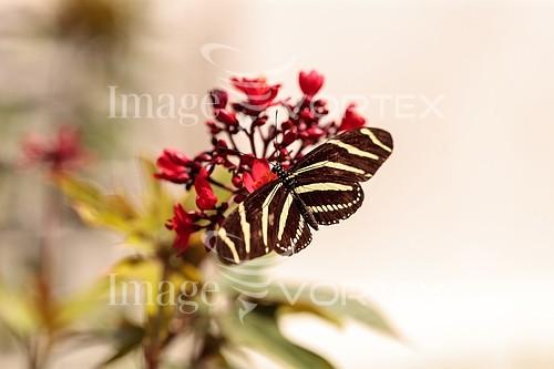 Animal / wildlife royalty free stock image #940307555