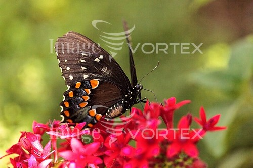 Animal / wildlife royalty free stock image #940785311