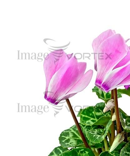 Flower royalty free stock image #942613916