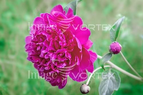Flower royalty free stock image #946848347