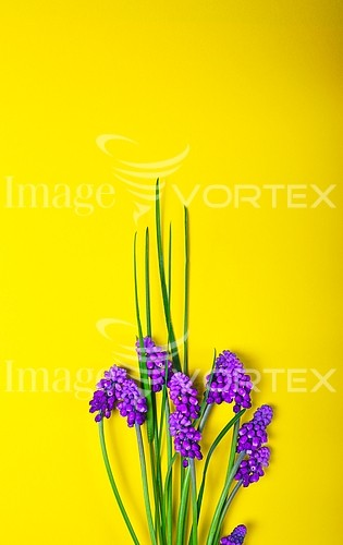 Flower royalty free stock image #946296359