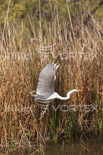 Bird royalty free stock image #947201316