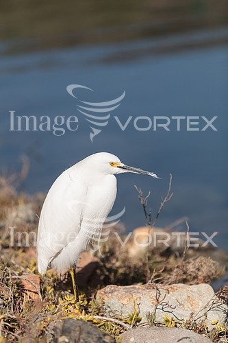Animal / wildlife royalty free stock image #948391413