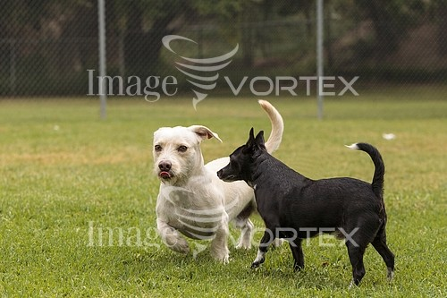 Pet / cat / dog royalty free stock image #948033596