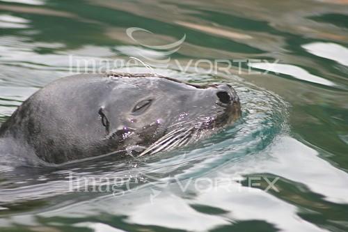 Animal / wildlife royalty free stock image #949524953