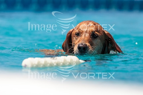 Pet / cat / dog royalty free stock image #950612768