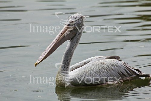 Bird royalty free stock image #953873988