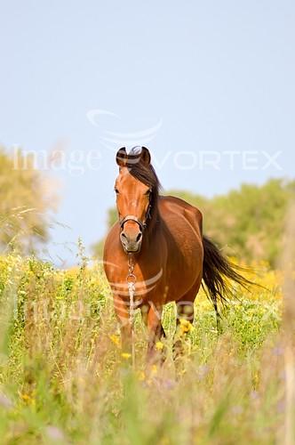Animal / wildlife royalty free stock image #954536939
