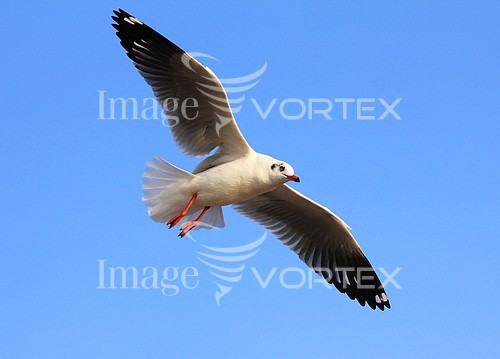Bird royalty free stock image #954672192