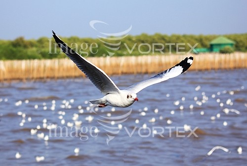 Bird royalty free stock image #954639010