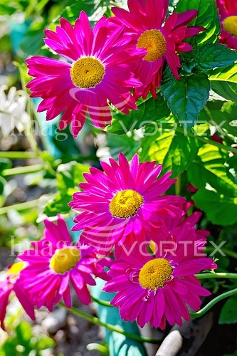 Flower royalty free stock image #954460205